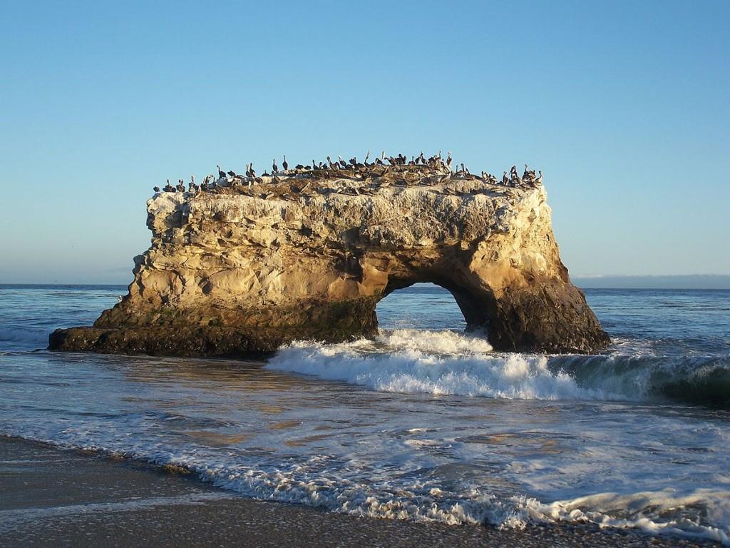 1200px-USA-Santa_Cruz-Natural_Bridges_State_Beach-4